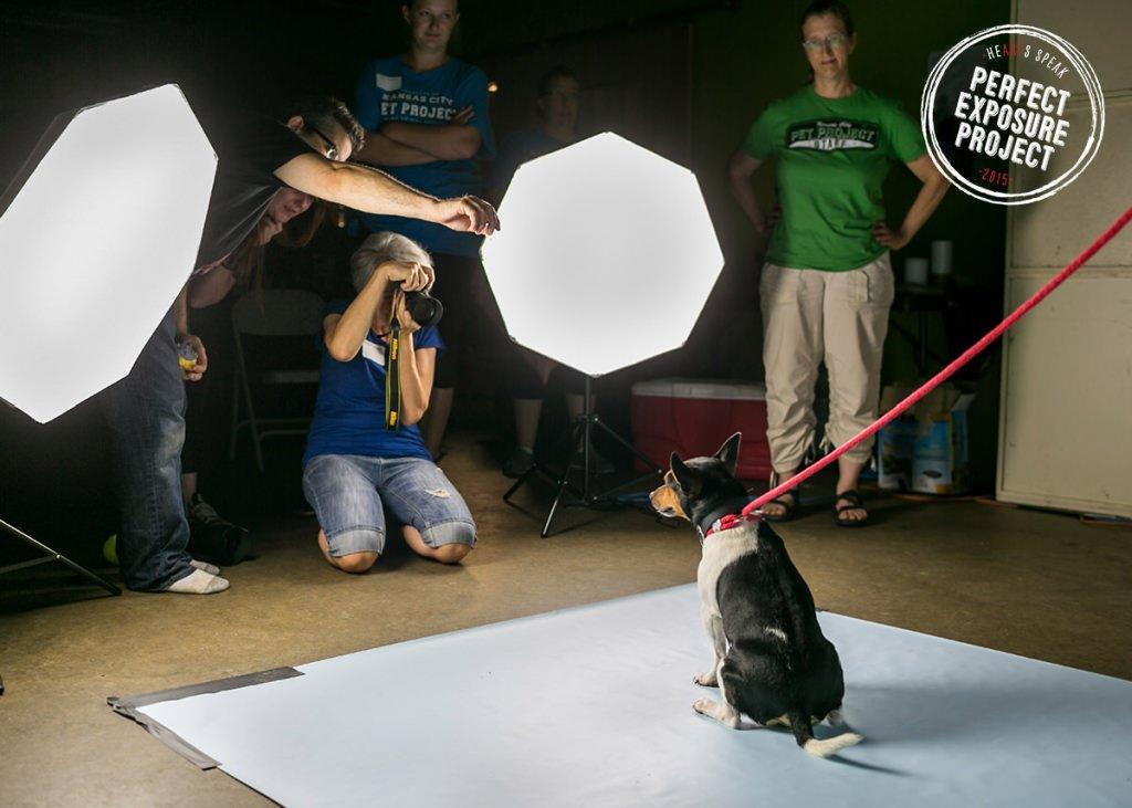 Perfect Exposure Project HeARTs Speak KC Pet Project