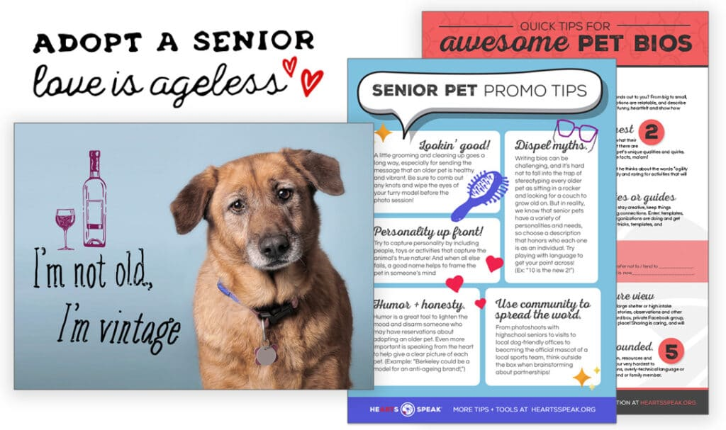 SeniorPromo 1024x607 - Senior Pets: Promo Toolkit