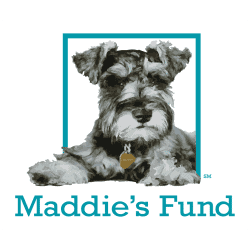 heartsspeak-maddies-fund
