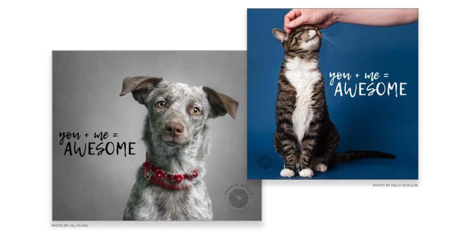 AdoptDayPreview e1493267497254 - Adopt A Shelter Pet Day Image Overlay