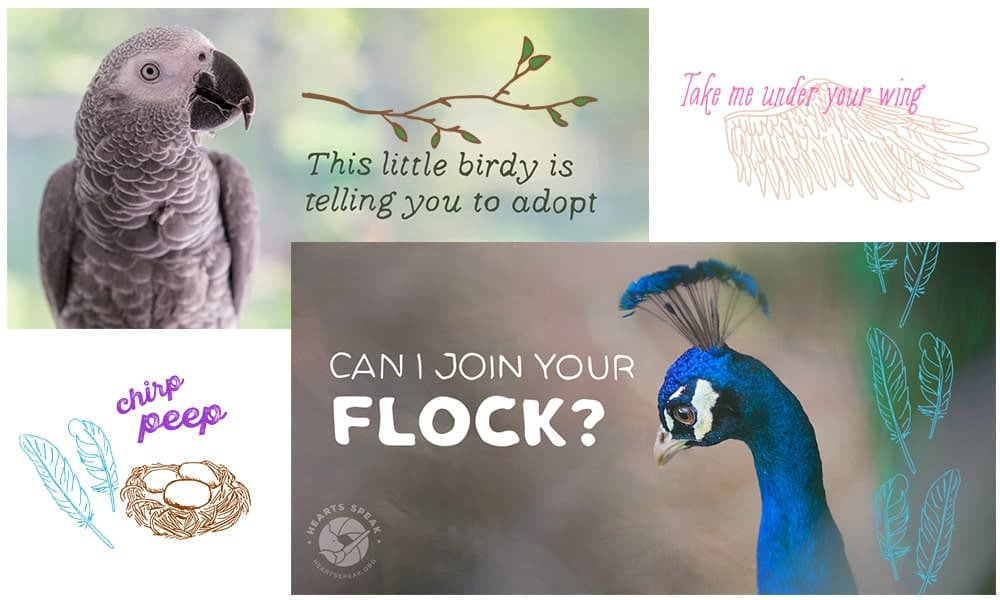 Birds Featured - Social Toolkit: Bird Day & Month