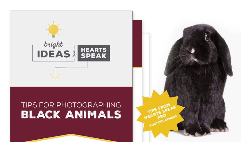 BlackPets MainPage - Tips for Photographing Black Animals