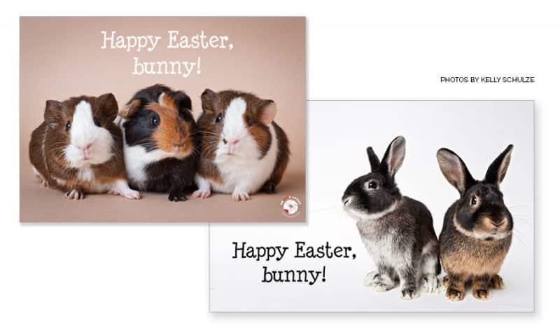 EasterSampleImage e1493267618569 - Easter Image Overlay