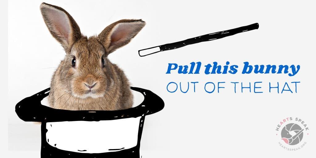 Example Layout5 2 1024x512 - Social Toolkit: Rabbits