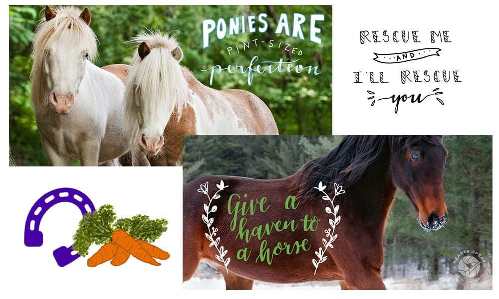 Horses Featured 1 - Social Toolkit Day of the Horse