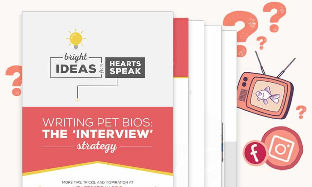 Interview Guide Featured - Pet Bio-Writing The Interview Strategy
