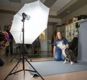 Easy Tips for Great Shelter Pet Photos