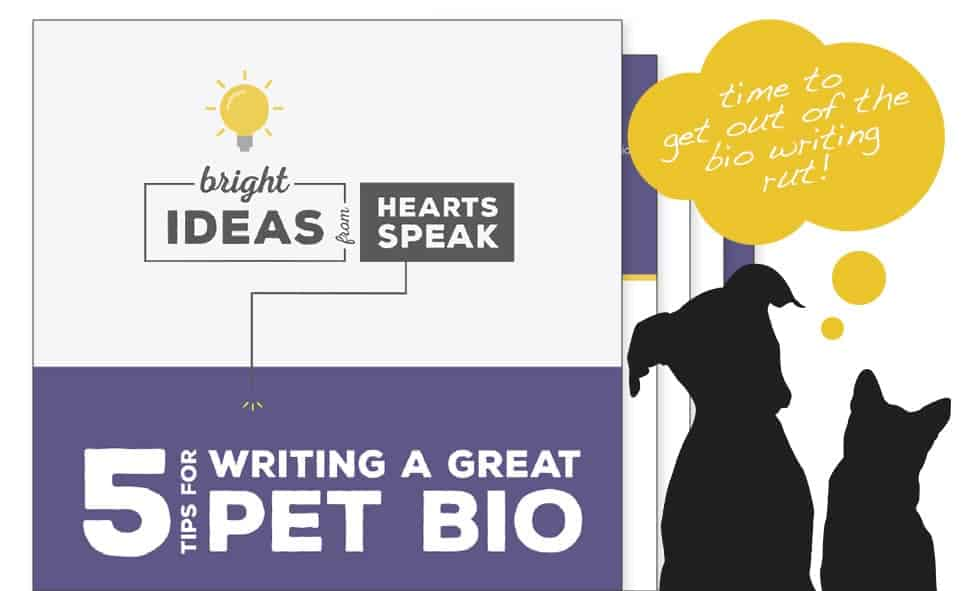 PetBio MainImage - Tips for Writing Pet Bios