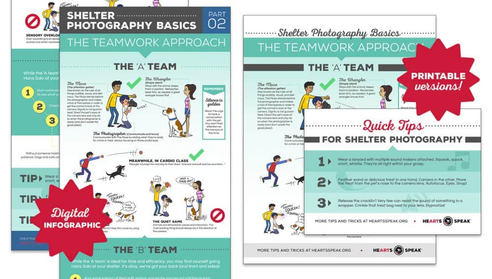 PhotogBasicsPart2 e1493267144844 - Shelter Photography Basics, Part 2: The A Team