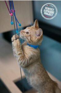HeARTs Speak cat photography photo session shelter marketing