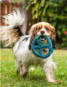 HeARTs Speak dog photography shelter pet photo