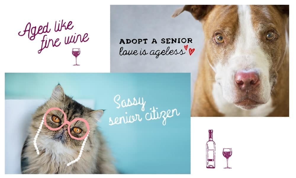 Senior 1 - Social Toolkit Senior Animals