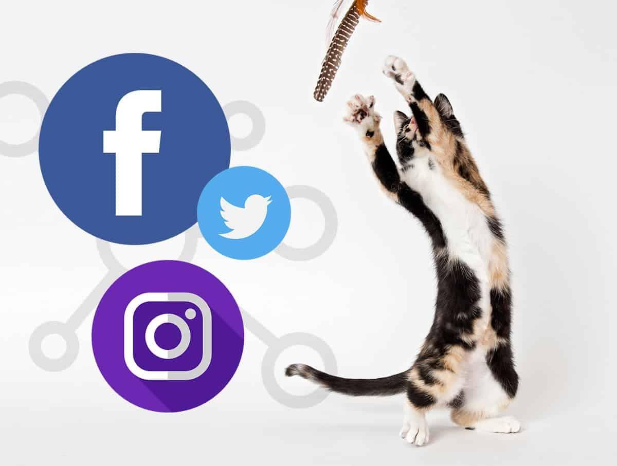 SocialMedia 1 - 5 Fresh Social Media Strategies for Shelters
