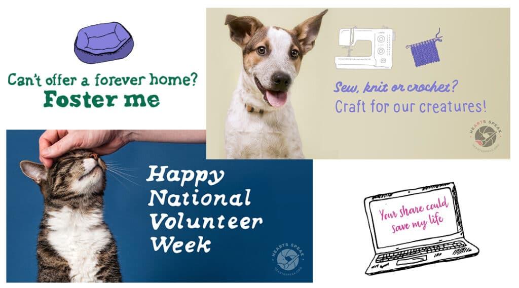 Volunteerweek 1024x569 - Social Toolkit Volunteers