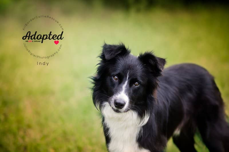 unnamed 3 1 - A Shelter Dog Story From Start to Happy End