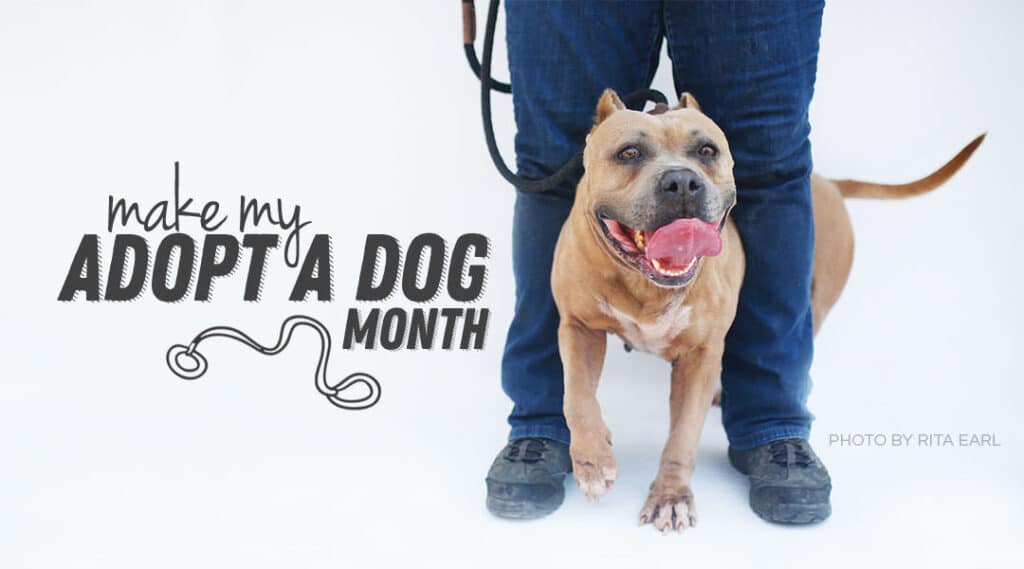 AdopADog Featured 1024x569 - Adopt A Dog Month Promo Toolkit