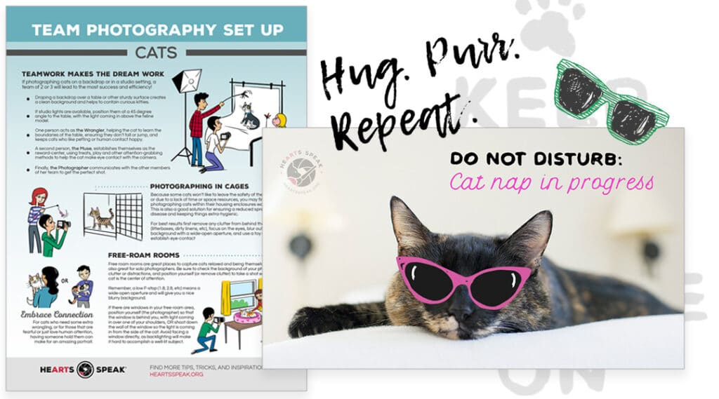 CatMonth 1024x569 - Adopt-A-Cat Month: Promo Toolkit