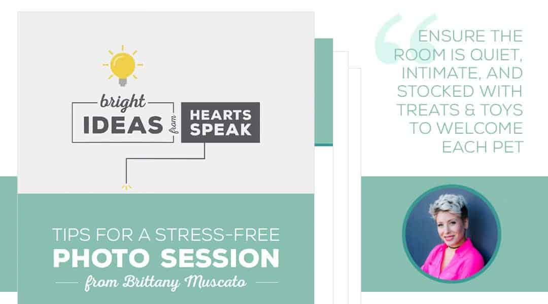 StressFree-Featured