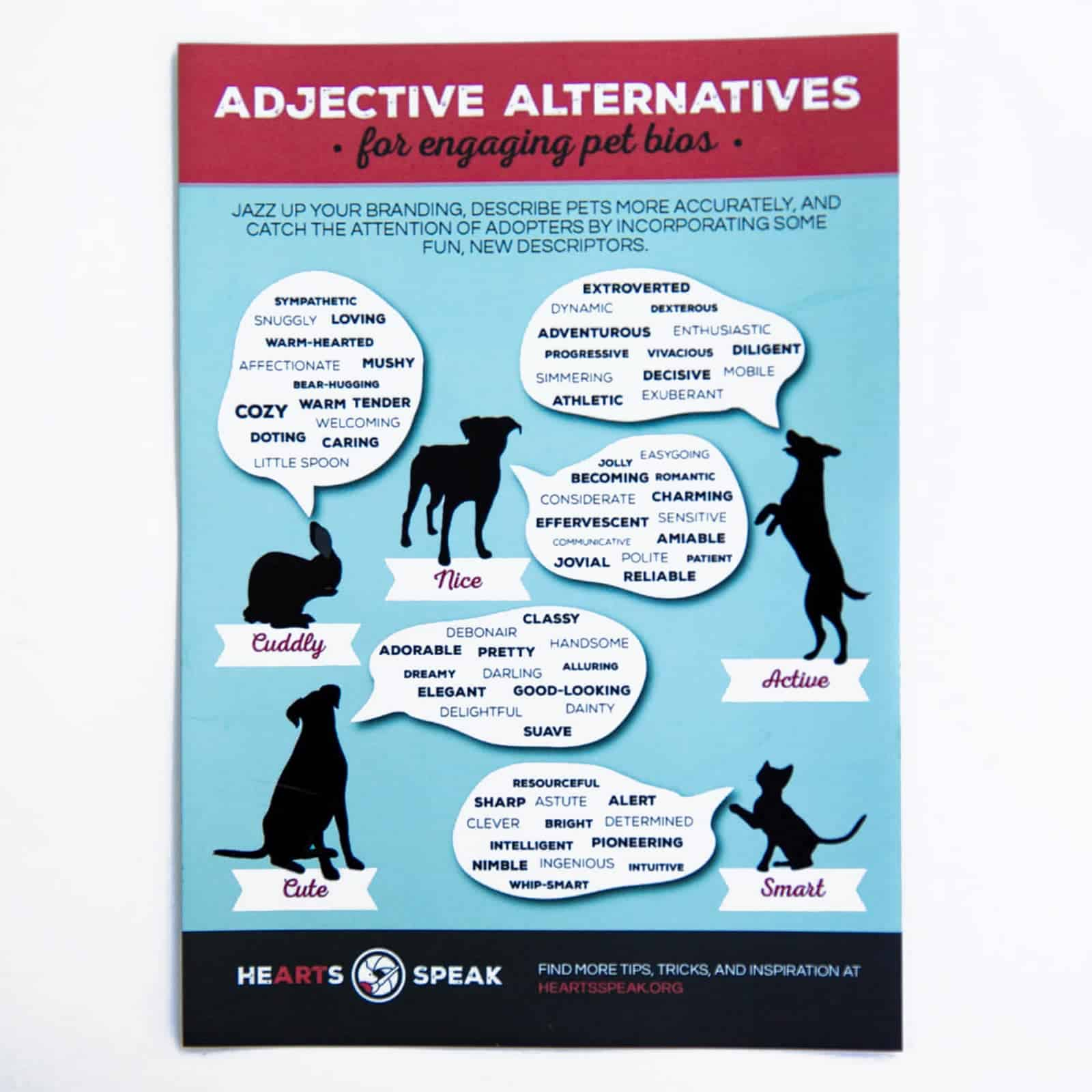 5M4A9149 - Magnet - Adjectives Alternatives