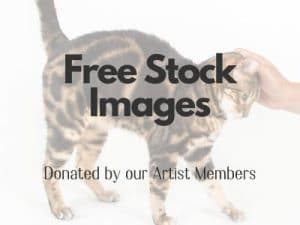Free stock imagery 300x225 - Communications & Marketing Guide for Shelters, Amid COVID-19