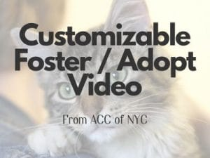 custom video download button 300x225 - Communications & Marketing Guide for Shelters, Amid COVID-19
