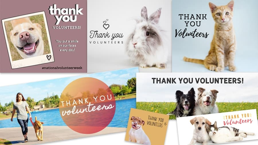 Editable Volunteer template preview image - National Volunteer Week: Customizable Canva Templates