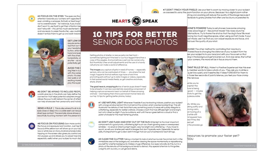 Senior Dog Photo Guide feature image - 10 Tips for Better Senior Dog Photos
