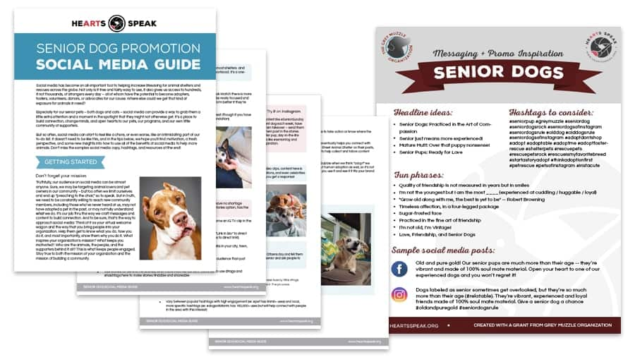 Senior Dog Social preview image - Guide to Social Media Magic for Senior Dogs