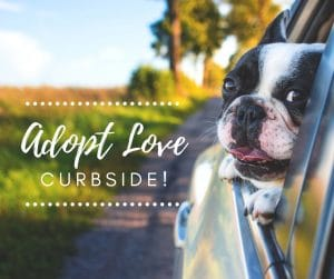 Adopt Love Curbside template 300x251 - Keep The Community Informed: Overlays + Customizable Templates for Coronavirus Updates