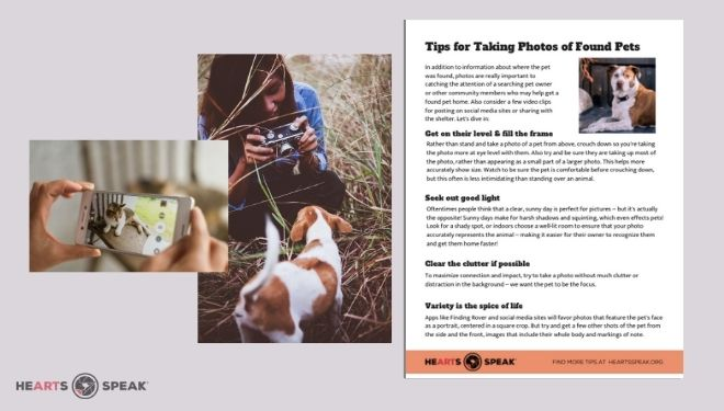 Found pet photo tips feature image