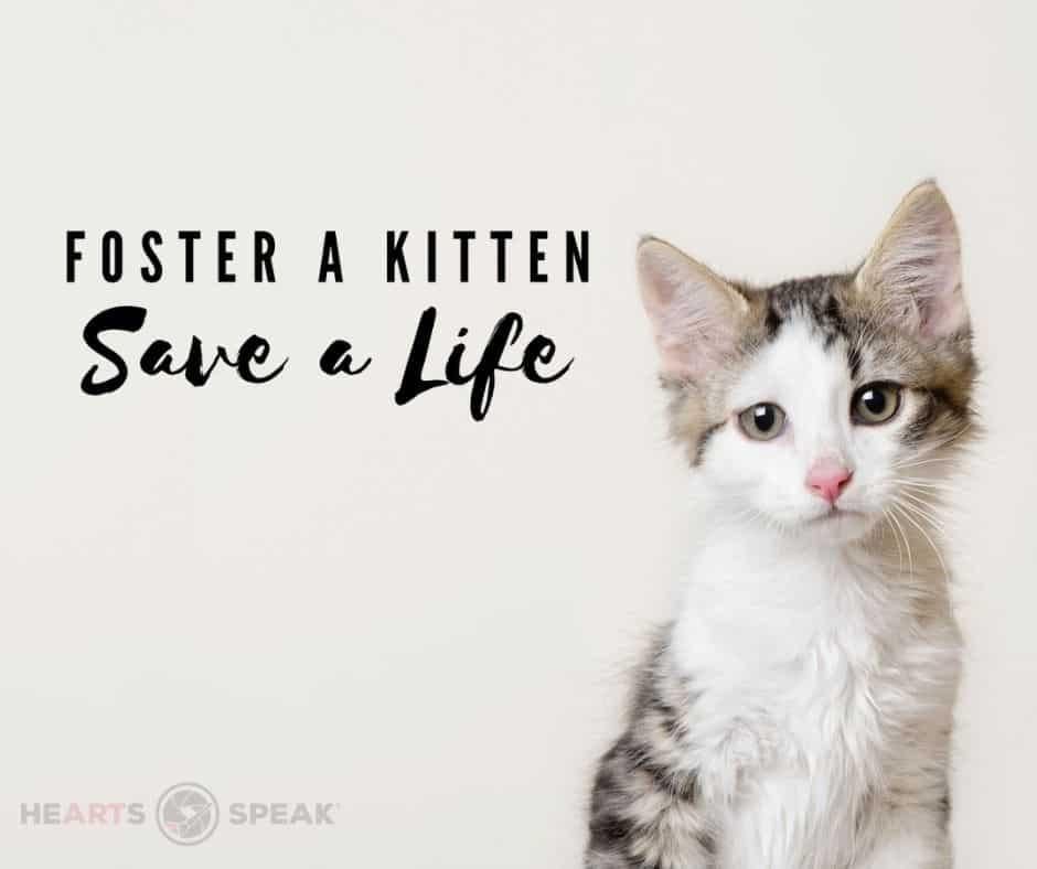Sample image - kitten season 1