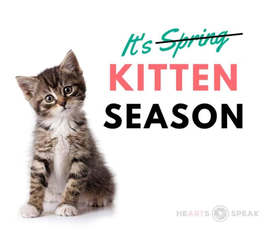 Kitten Season Marketing Toolkit